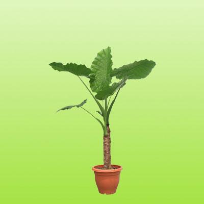 盆栽绿植20