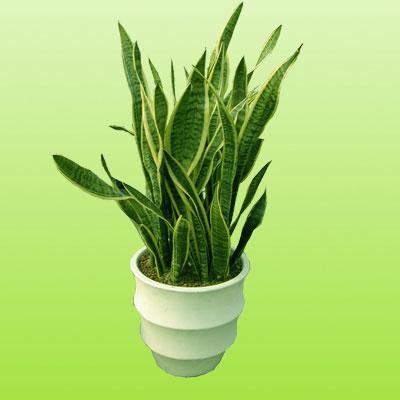 盆栽绿植17