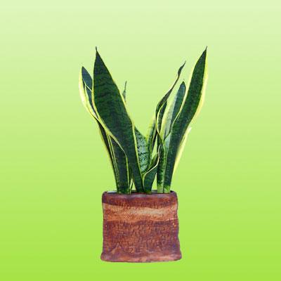 盆栽绿植16