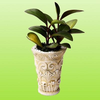 盆栽绿植15