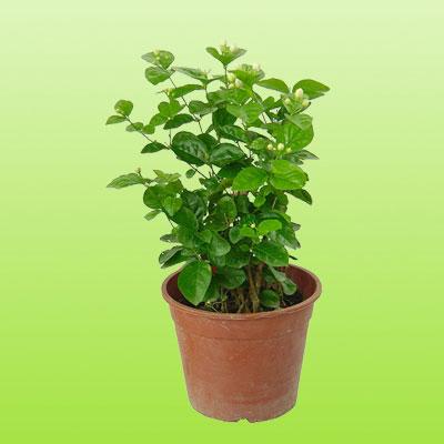 盆栽绿植22