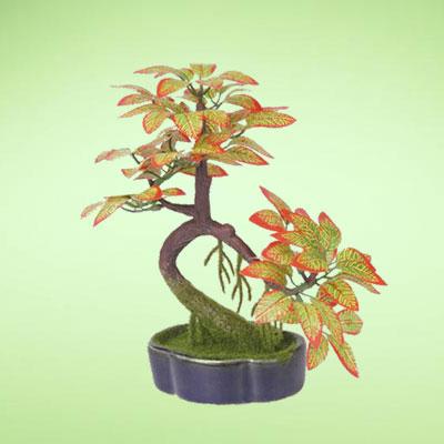 盆栽绿植11