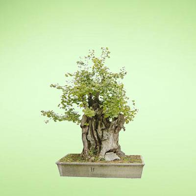 盆栽绿植9