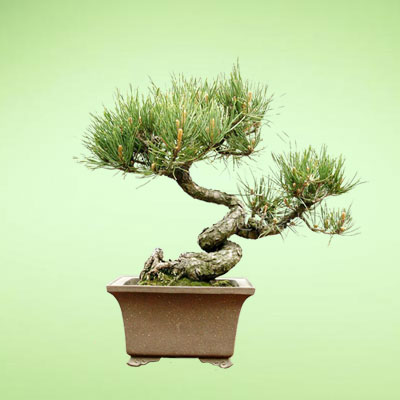 盆栽绿植10