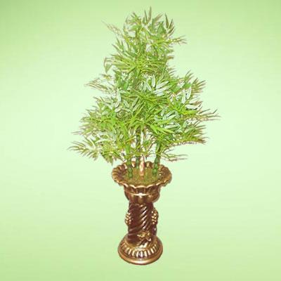 盆栽绿植7