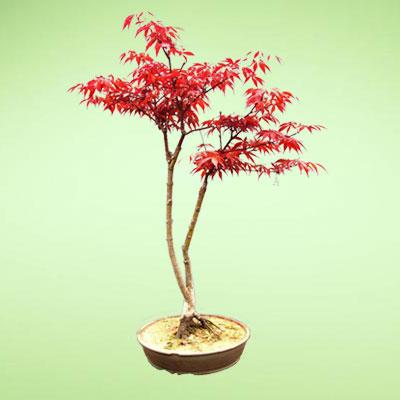 盆栽绿植5