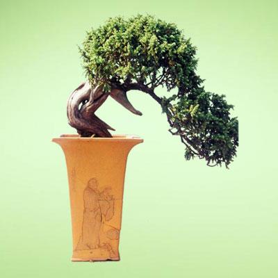 盆栽绿植4