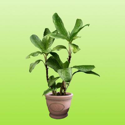 盆栽绿植18