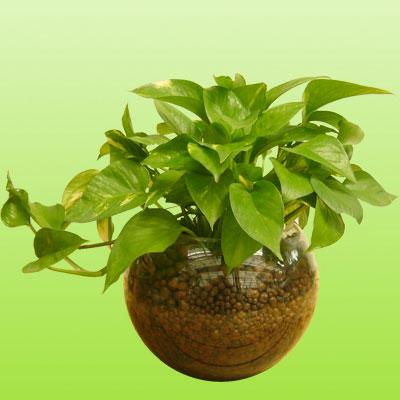 盆栽绿植21